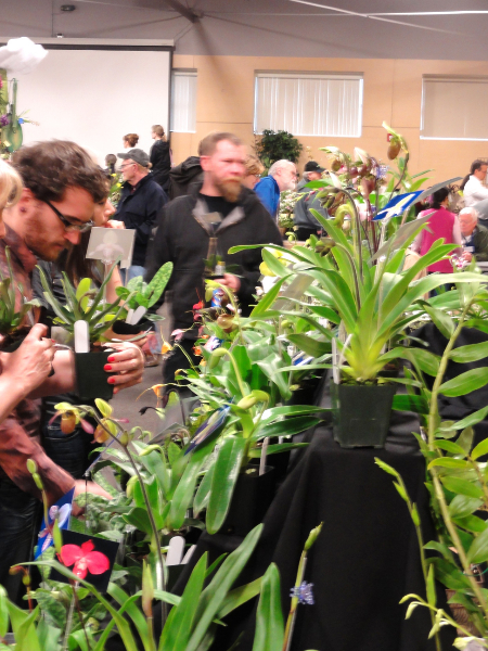 2013 Oregon Orchid Show and Sale