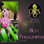 phragmipedium-2