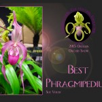phragmipedium-3